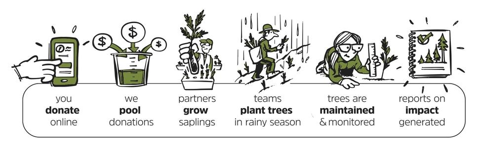 Image describing a linear process of donations, those donations being pooled, partners growing saplings, teams planting trees, those trees being monitored, and finally reports being generated on impact.